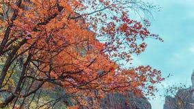 Stagione di autunno degli alberi del parco nazionale di Zion immagini stock libere da diritti