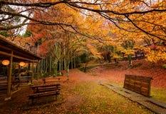 Stagione di autunno di Kyoto Immagini Stock