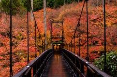 Stagione di autunno di Kyoto Fotografie Stock Libere da Diritti
