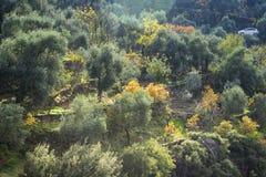 Stagione di autunno e gli alberi immagini stock libere da diritti