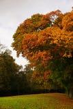 Stagione di autunno nel Belgio Fotografie Stock Libere da Diritti