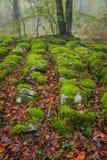 Stagione di autunno nella foresta Fotografia Stock