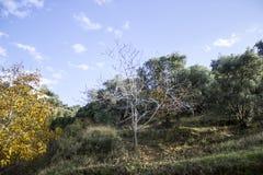 Stagione di autunno sollevata ancora per gli alberi fotografia stock