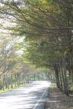 Stagione di autunno a Taipe& x27; montagna di s Immagini Stock
