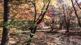 Stagione di caduta del parco nazionale di kamikochi, Giappone Fotografia Stock