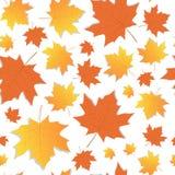 Stagione di caduta dell'ornamento delle foglie di acero di Autumn Seamless Pattern Background Yellow Fotografie Stock Libere da Diritti