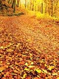 Stagione di caduta Sun attraverso gli alberi sul percorso in foresta dorata Immagine Stock Libera da Diritti