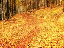 Stagione di caduta Sun attraverso gli alberi sul percorso in foresta dorata Fotografia Stock