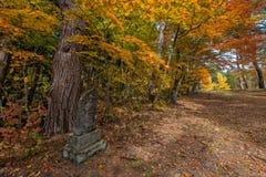 Stagione di colore di autunno intorno a Josen-ji Immagine Stock