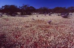 Stagione di fioritura in Est-Australia fotografia stock libera da diritti