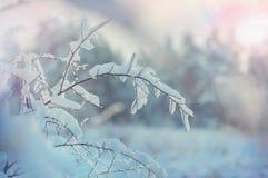 Stagione di inverno immagine stock libera da diritti