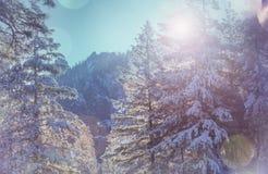 Stagione di inverno immagine stock