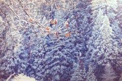 Stagione di inverno immagini stock