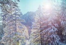 Stagione di inverno fotografia stock libera da diritti