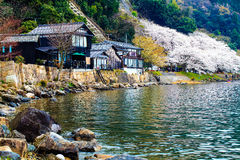 Stagione di Sakura nel Giappone Immagine Stock Libera da Diritti