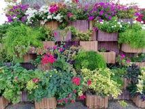 Stagione differente di autunno del fondo dei fiori Fotografia Stock Libera da Diritti