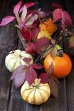 Stagione e decorazione del raccolto con la zucca Fotografia Stock