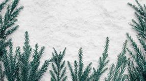 Stagione invernale, idee di concetti di natale con il pino e neve immagini stock libere da diritti