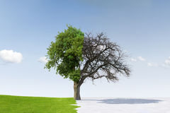 Stagioni cambianti dell'albero Fotografia Stock