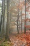Stagioni che cambiano a partire dall'estate in concetto di Autumn Fall indicato in o Fotografia Stock Libera da Diritti