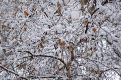 Stagioni nella città Estate, autunno, inverno Fotografia Stock Libera da Diritti