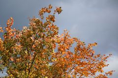 Stagioni nella città Estate, autunno, inverno Immagine Stock Libera da Diritti