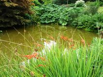 Pond surrounded by plants and flowers. A pond surrounded by dense shrubs and flowering plants Royalty Free Stock Image