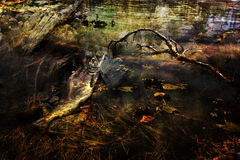 Stagnant Waters Stock Images