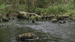 Stagnatie van logboeken en stenen op de rivier stock footage