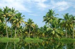 Stagni del Kerala Immagini Stock