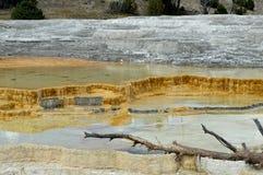 Stagni di acqua di Yellowstone Immagini Stock