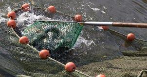 stagni di allevamento del pesce Fotografia Stock Libera da Diritti