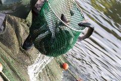 stagni di allevamento del pesce Immagine Stock