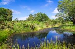 Stagno ad Arne nella campagna di Dorset Fotografie Stock
