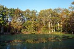 Stagno aus. di Evées della giumenta nella foresta di Fontainebleau Fotografie Stock
