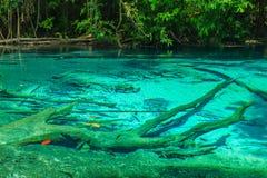 Stagno blu verde smeraldo Krabi Tailandia Immagine Stock Libera da Diritti
