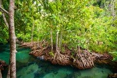 Stagno blu verde smeraldo Krabi, Tailandia Fotografie Stock Libere da Diritti