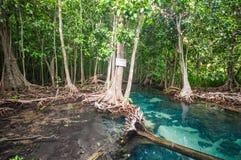 Stagno blu verde smeraldo Krabi, Tailandia Fotografia Stock