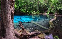 Stagno blu verde smeraldo nella provincia di Krabi, Tailandia Fotografie Stock Libere da Diritti