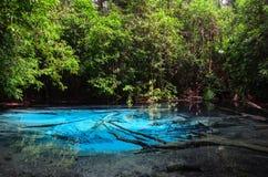 Stagno blu verde smeraldo nella provincia di Krabi, Tailandia Immagini Stock Libere da Diritti