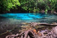 Stagno blu verde smeraldo nella provincia di Krabi, Tailandia Immagine Stock Libera da Diritti