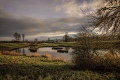Stagno calmo con i colori dorati di alba e le erbe verdi fertili del campo fotografie stock libere da diritti