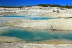 Stagno colloidale in bacino di Porcellain a Norris Geyser Basin, parco nazionale di Yellowstone, Wyoming fotografia stock libera da diritti