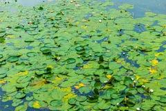 Stagno con i lillies dell'acqua Immagini Stock
