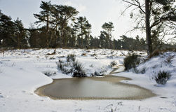 Stagno congelato Fotografie Stock