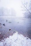 Stagno congelato con pochi alberi nella mattina nebbiosa Immagini Stock Libere da Diritti