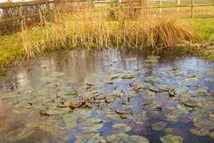 Stagno congelato del giardino Fotografia Stock Libera da Diritti