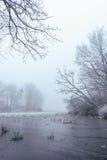 Stagno congelato nella mattina nebbiosa Immagini Stock Libere da Diritti