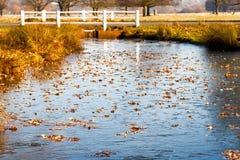 Stagno congelato in Richmond Park fotografia stock libera da diritti