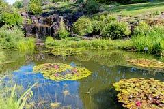 Stagno decorativo con la cascata e lilly al parco della città Immagini Stock